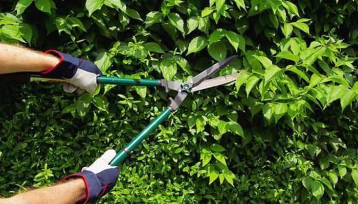 El nuevo programa de empleo en jardines históricos crea 130 puestos en Sevilla.
