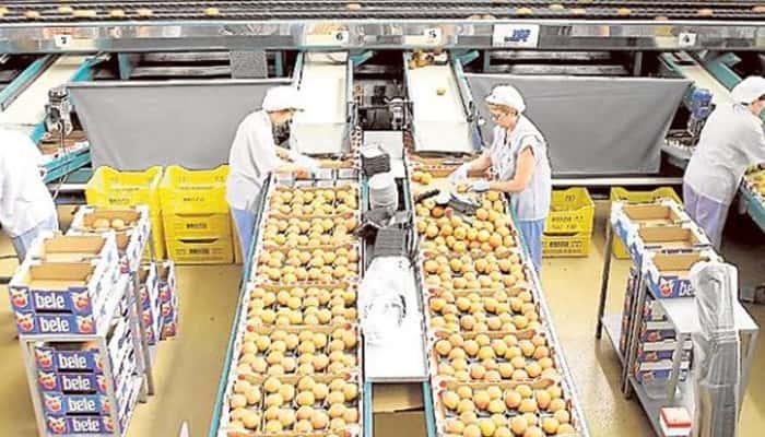50 puestos de Envasadores de frutas y hortalizas en El Ejido