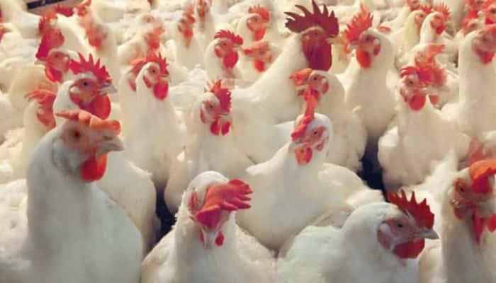 30 puestos de trabajo de Operarios para empresa avícola en El Viso el Alcor