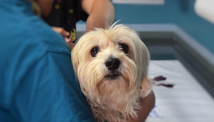 Perro en la clinica veterinaria