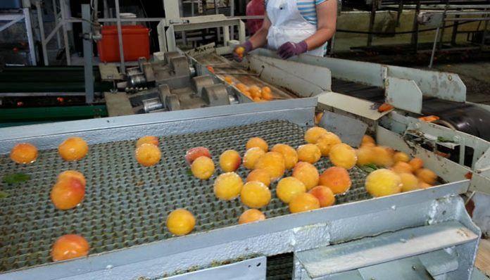 Linea de producción de fruta